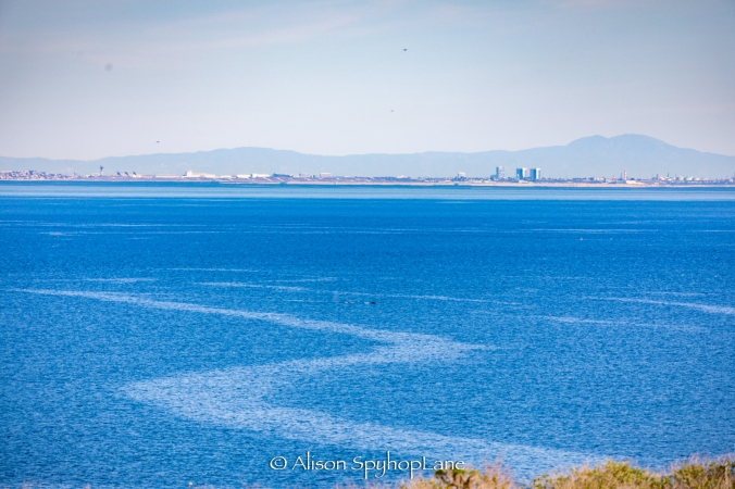 2018-03-05-whales-santamonicabay--pt-dume-3371