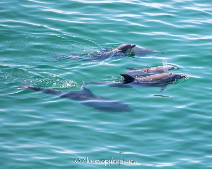 2018-03-08-dolphins-pt-dume-3966