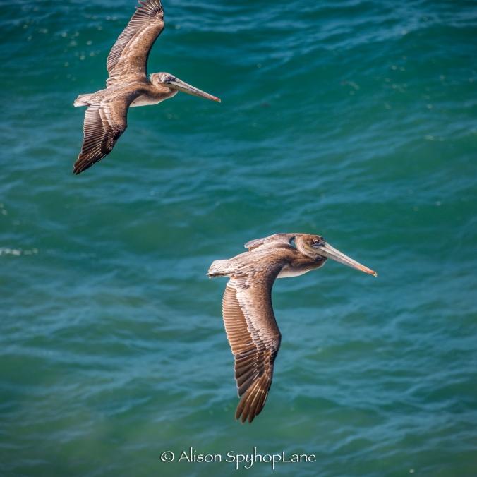 2018-03-14-pelicans-pt-dume-6307