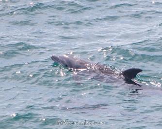 2018-03-18-dolphins-eye--pt-dume-7553