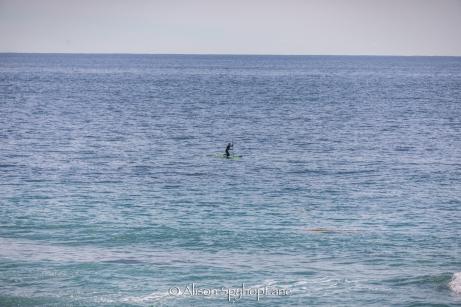 2018-03-18-paddler-whale-pt-dume-7663
