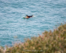 2018-03-18-paddler-sea-lion-cove-pt-dume-7576