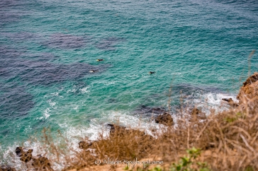 2018-03-18-paddlers-sea-lion-cove-pt-dume-7596