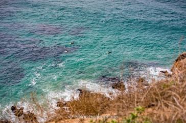 2018-03-18-paddlers-sea-lion-cove-pt-dume-7596