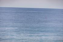 2018-03-18-whale-footprints-bouy-pt-dume-7665