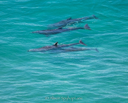 2018-04-18-dolphins-pt-dume-6905