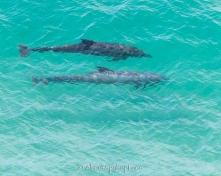 2018-04-18-dolphins-pt-dume-6987